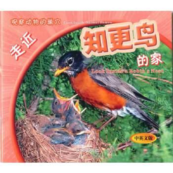 观察动物的巢穴:走近知更鸟的家